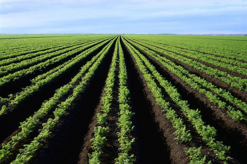 Компания «ВК-строй» Статья: Плодородные земли